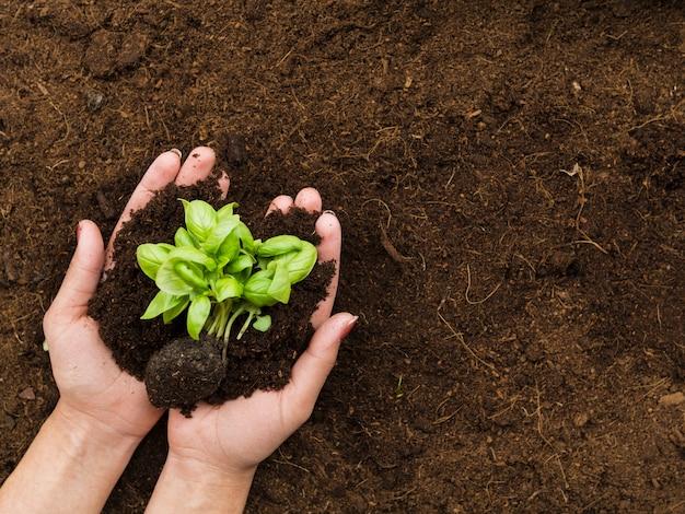 Bovenaanzicht plant vastgehouden door handen Gratis Foto