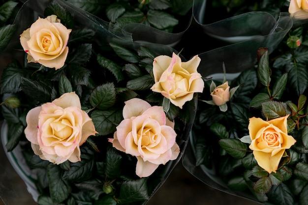 Bovenaanzicht regeling met gele rozen Gratis Foto