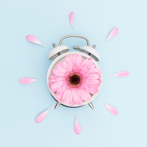 Bovenaanzicht regeling met roze margriet en klok Gratis Foto