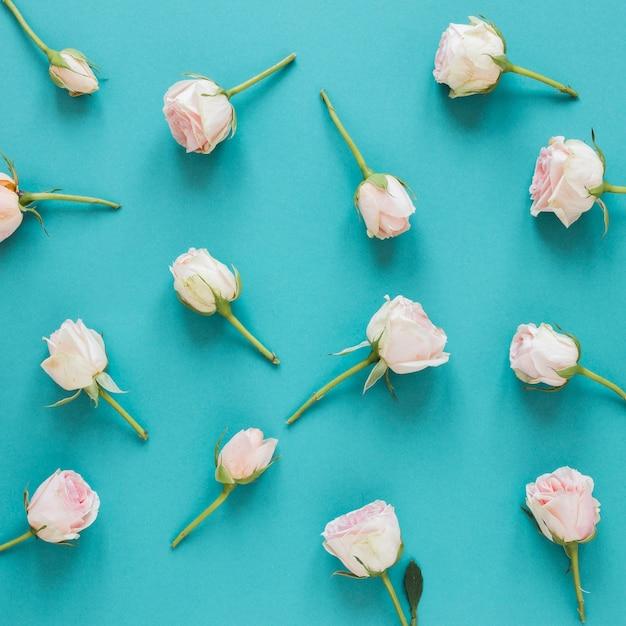 Bovenaanzicht regeling van lente witte rozen Gratis Foto