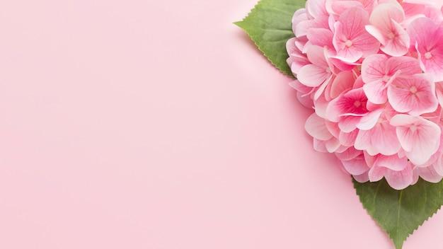 Bovenaanzicht roze hortensia met kopie-ruimte Gratis Foto
