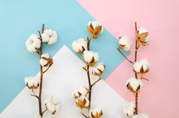 Bovenaanzicht takken met katoenen bloemen Gratis Foto