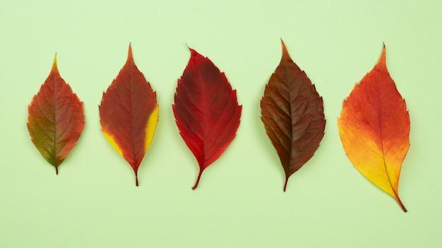 Bovenaanzicht van assortiment van gekleurde herfstbladeren Premium Foto