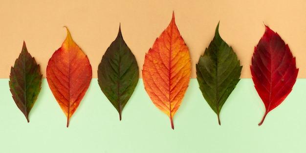 Bovenaanzicht van assortiment van gekleurde herfstbladeren Gratis Foto