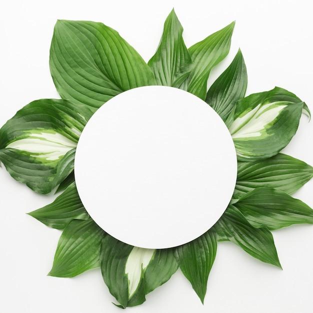 Bovenaanzicht van bladeren frame concept met kopie ruimte Gratis Foto