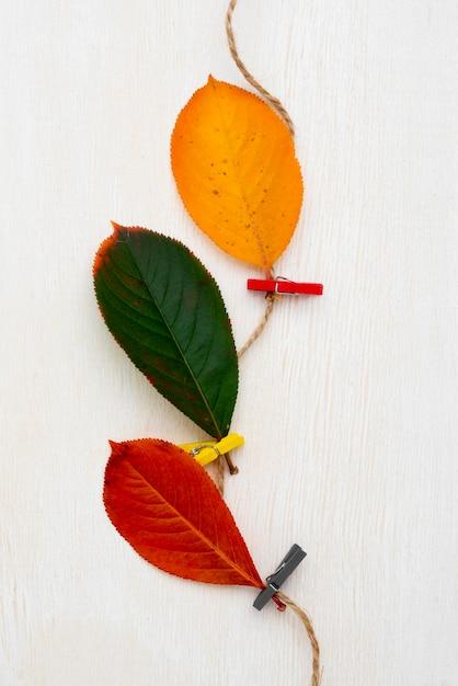 Bovenaanzicht van bladeren vastgebonden met een touwtje Gratis Foto