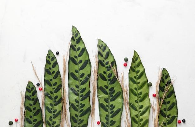 Bovenaanzicht van bladeren Gratis Foto