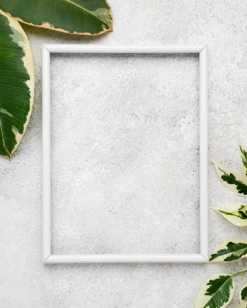Bovenaanzicht van frame met bladeren van de plant Gratis Foto