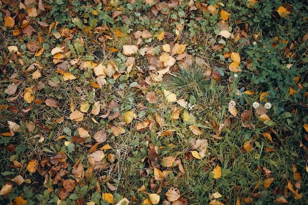 Bovenaanzicht van groen gras bedekt met gelige bladeren in de herfst. horizontaal schot van vele kleurrijke gele en bruine bladeren die op natte weide liggen. herfst, seizoenen, natuur en milieu concept Gratis Foto