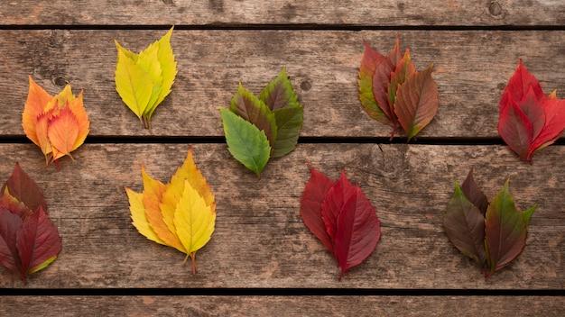 Bovenaanzicht van herfstbladeren Premium Foto