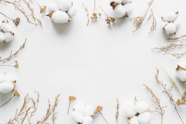 Bovenaanzicht van katoenen bloemen Gratis Foto
