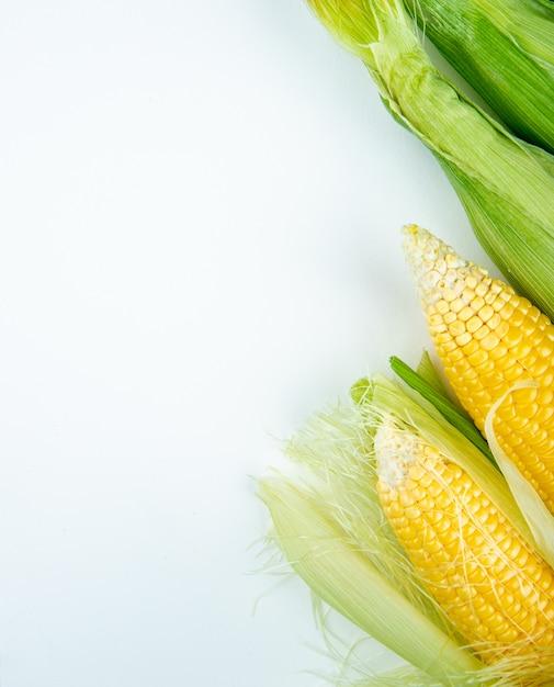 Bovenaanzicht van maïskolven aan de rechterkant en wit met kopie ruimte Gratis Foto