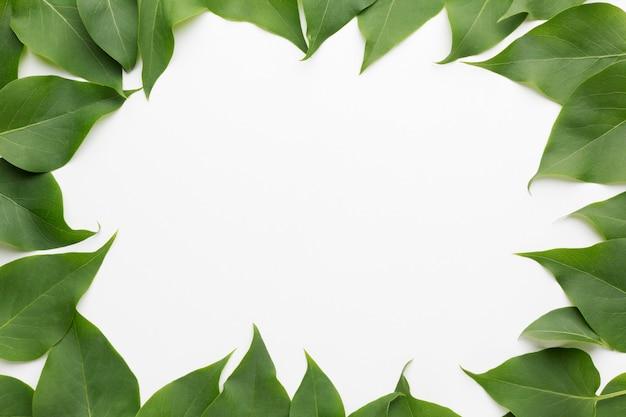 Bovenaanzicht van mooie lila verlaat frame concept Gratis Foto