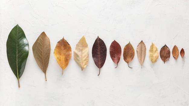 Bovenaanzicht van prachtig gekleurde herfstbladeren gerangschikt in lijn Gratis Foto