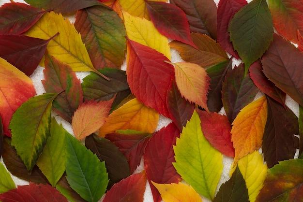 Bovenaanzicht van veel gekleurde bladeren Premium Foto