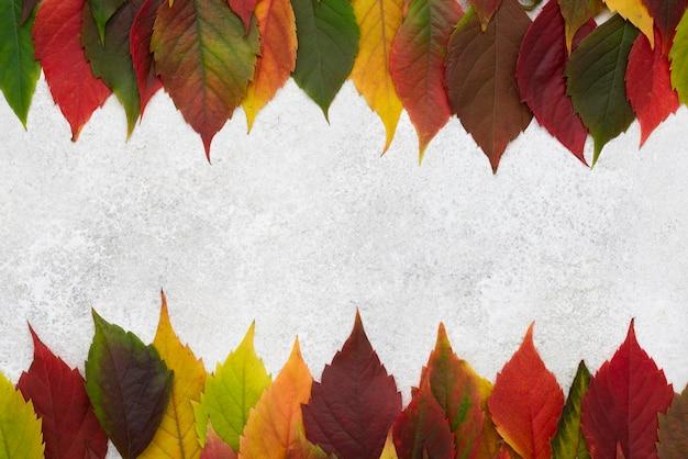 Bovenaanzicht van verschillende gekleurde bladeren frame Premium Foto