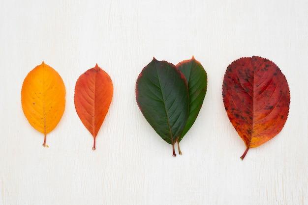 Bovenaanzicht van verschillende gekleurde bladeren Premium Foto