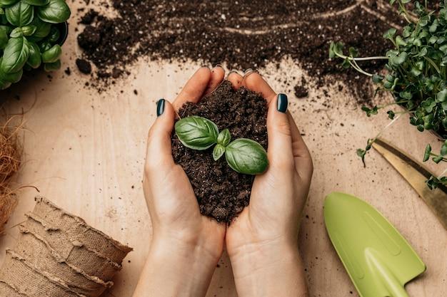 Bovenaanzicht van vrouwelijke handen met bodem en plant Gratis Foto