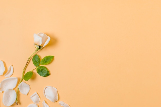 Bovenaanzicht witte bloemblaadjes met kopie ruimte Gratis Foto