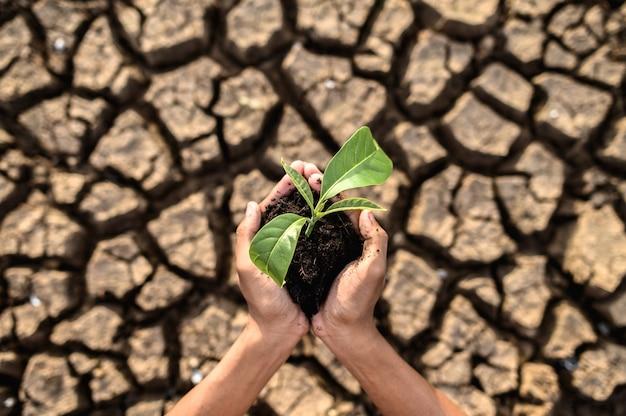 Boy zijn stand houden zaailingen zijn in droog land in een verwarmende wereld. Gratis Foto
