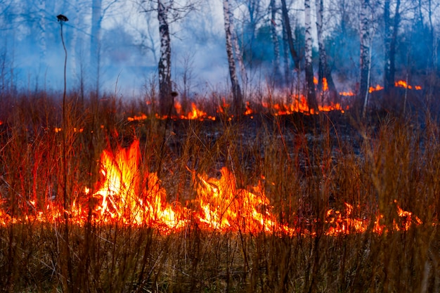 Brand in de bosvlammen tijdens een brand Premium Foto