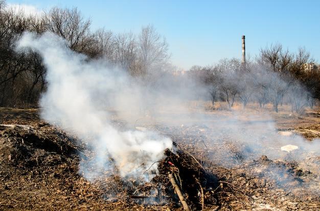 Brand in een droog bos. Premium Foto