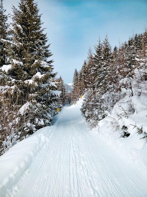 Brede opname van een weg omringd door pijnbomen met een blauwe lucht in de winter Gratis Foto