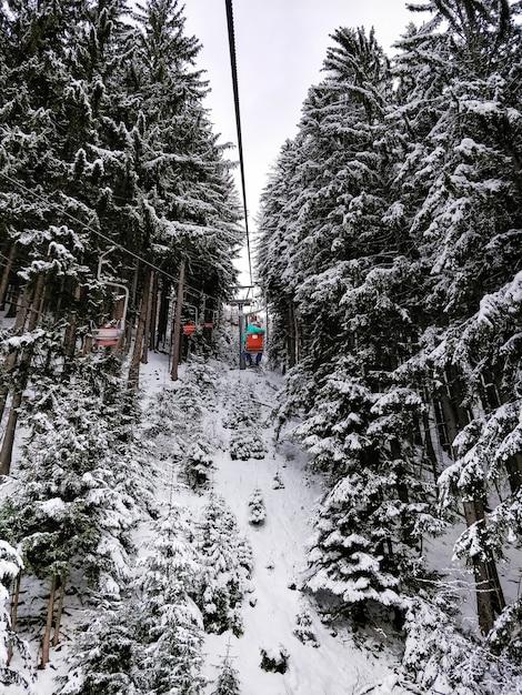 Brede opname van skiliften omgeven door pijnbomen Gratis Foto