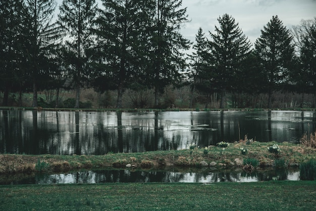Breed mooi schot van een meer dat door bomen wordt omringd Gratis Foto