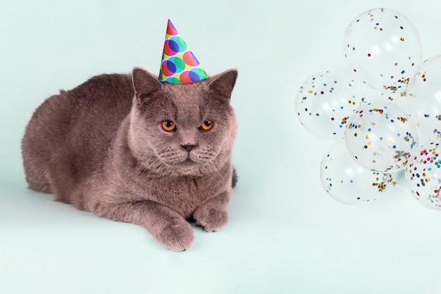 Britse grijze kat in de hoed van de feestmuts en ballonnen op lichtblauwe achtergrond. Premium Foto