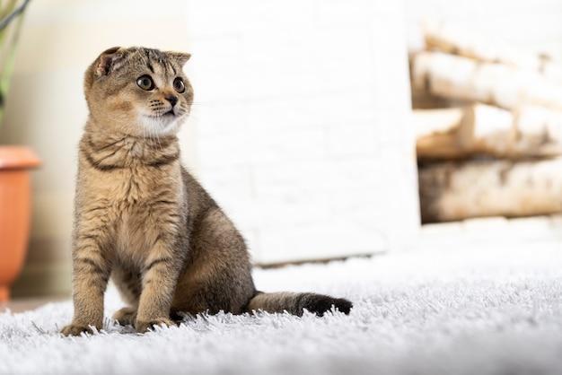 Britse kleine kitten op tapijt tegen open haard Premium Foto