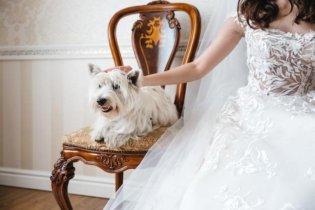Bruid met een mooie hond op de huwelijksdag Gratis Foto