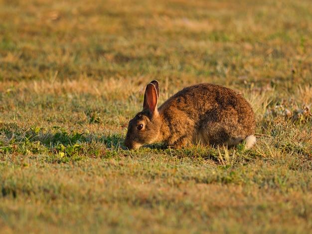 Bruin konijn in een veld omgeven door gras onder zonlicht met een onscherpe achtergrond Gratis Foto