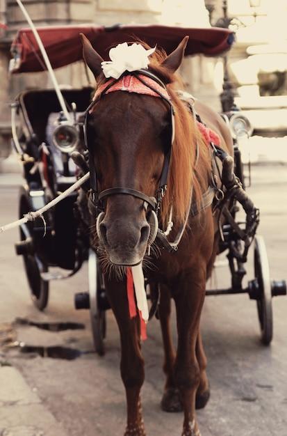 Bruin paard in harnas in toeristische route Premium Foto