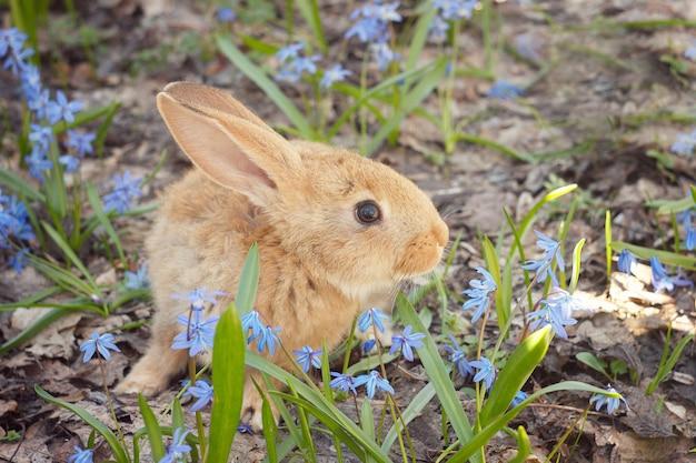Bruin pluizig konijntje in een weide van blauwe bloemen Premium Foto