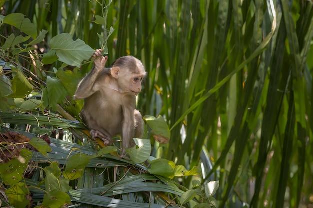 Bruine aap zittend op groene plant Gratis Foto