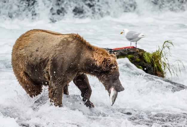 Bruine beer met een zalm in zijn bek Premium Foto