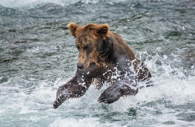 Bruine beer zwemt in het meer Premium Foto