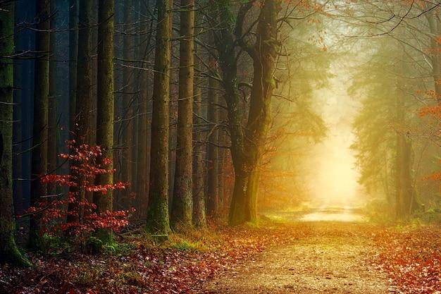 Bruine bomen met mist overdag Gratis Foto