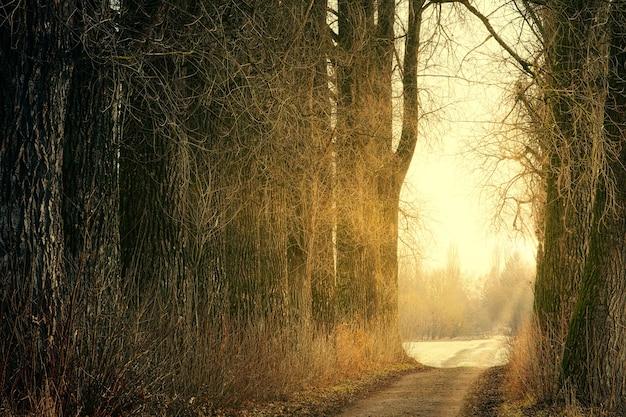 Bruine bomen op bruine onverharde weg overdag Gratis Foto
