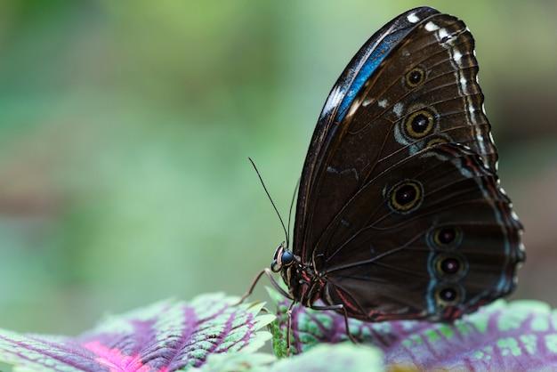 Bruine en blauwe vlinder op kleurrijke bladeren Gratis Foto