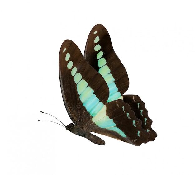 Bruine en blauwe vlinder Premium Foto