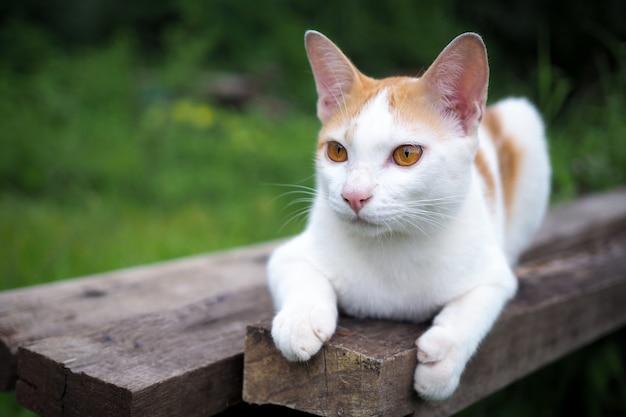 Bruine en witte kat thai op oude houten in aardlandschap Premium Foto