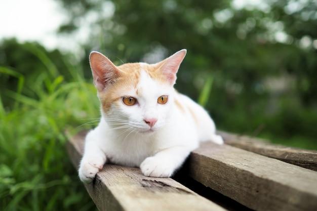 Bruine en witte kat thai op oude houten in tuin Premium Foto