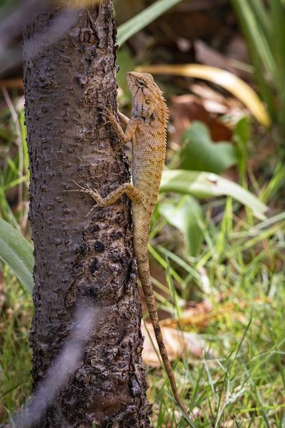 Bruine en zwarte hagedis op bruine boomtak Gratis Foto