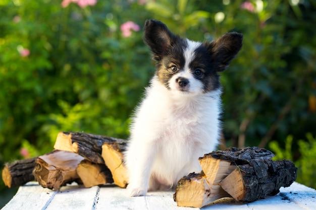 Brutaal portret van de puppy Premium Foto