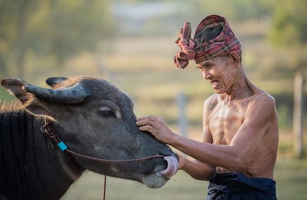 Buffalo en man Premium Foto