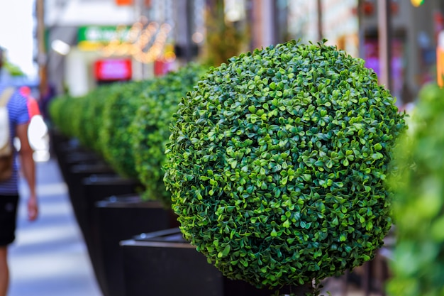 Buitenkant van het hotel en restaurant, met bloeiende kleine bomen Premium Foto