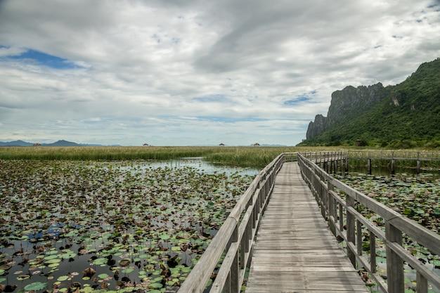 Bung bua houten brug, de aardsleep in lotusbloemmeer met het landschap van de kalksteenberg bij het nationale park van khao sam roi yod, de provincie thailand van prachuap khiri khan. Premium Foto