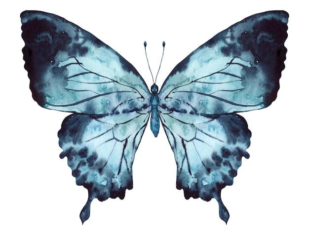 Butterfly indigo blue watercolor op witte achtergrond wordt geïsoleerd die Premium Foto